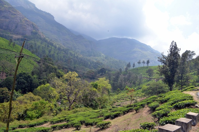 From Udumulapet to Munnar Way